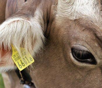 Umsetzung der Lebensmittelherkunftskennzeichnung!